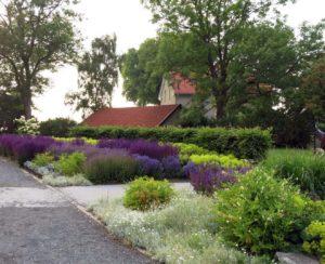 Blomsterprakt (foto: Helene Stjernlöf)