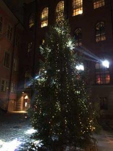 Julgran i strålkastarljus (foto: Helene Stjernlöf)
