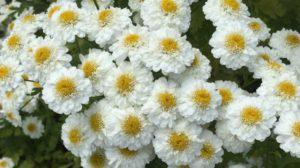 Blomster (foto: Helene Stjernlöf)